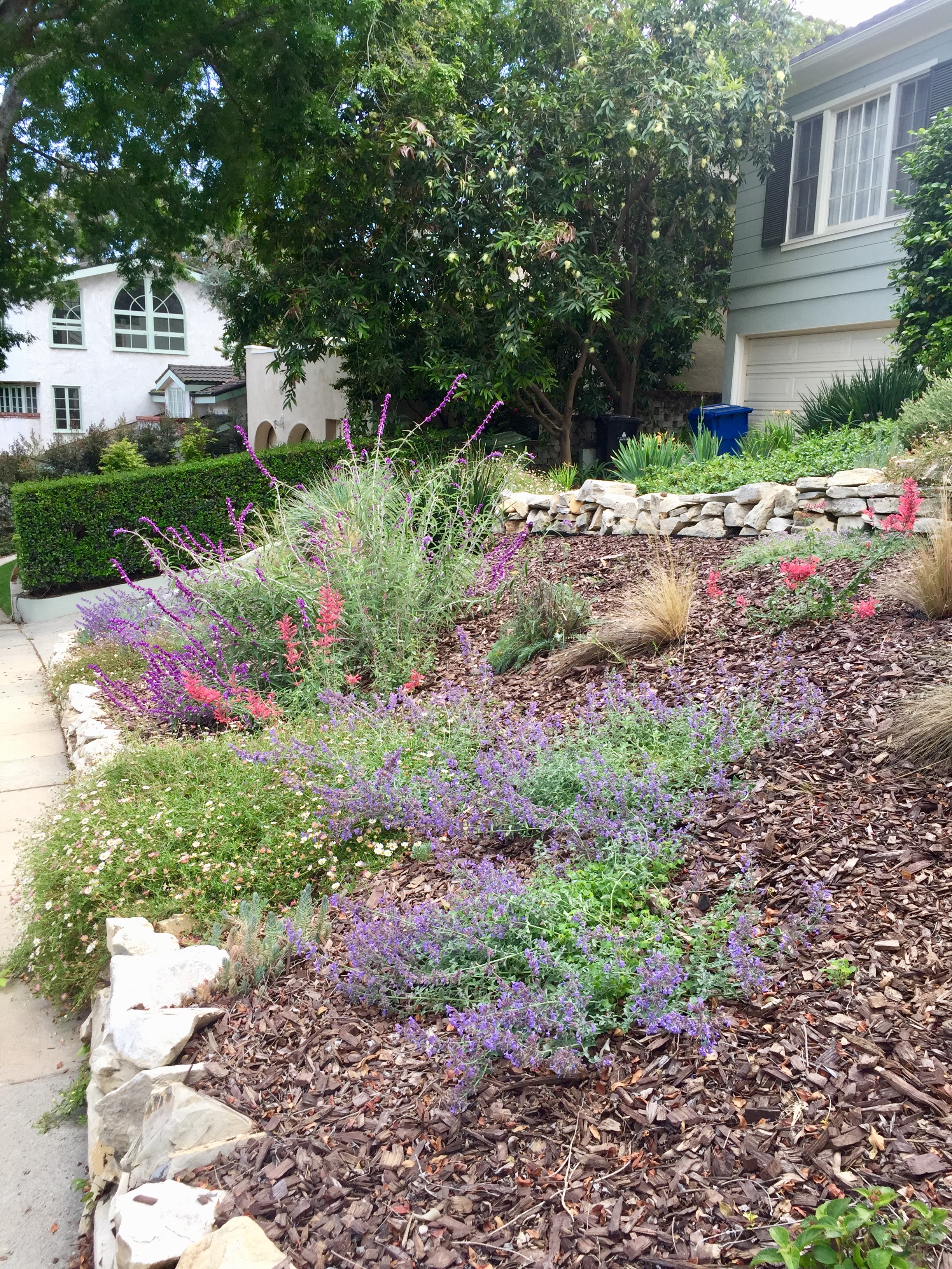 Low water, low maintenance garden in West Los Angeles