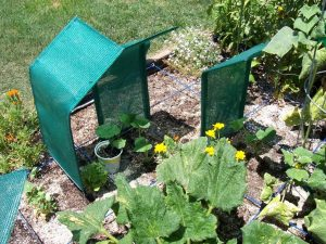 Build shade structures for stressed plants
